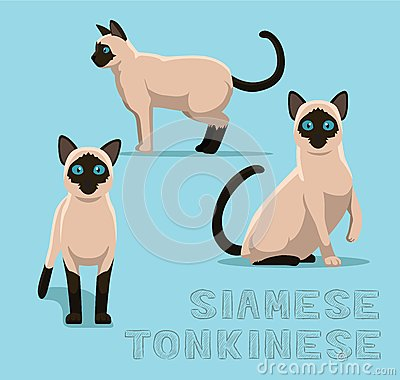 Tonkinese clipart #15, Download drawings