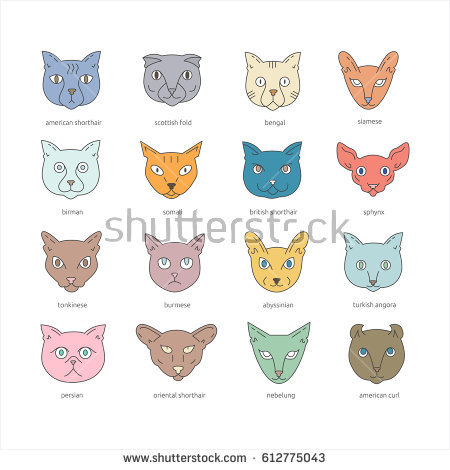 Tonkinese clipart #6, Download drawings