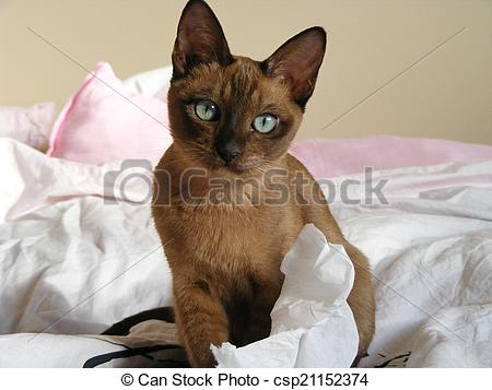 Tonkinese clipart #13, Download drawings