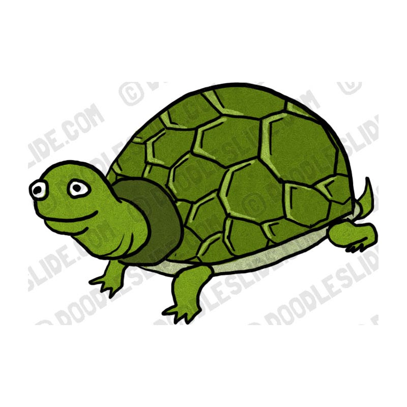 Turtoise clipart #20, Download drawings