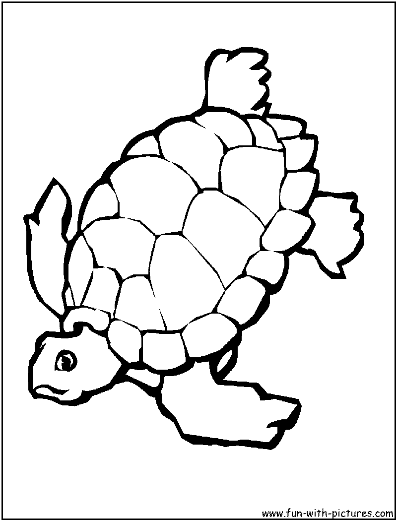 Tortoise coloring #8, Download drawings