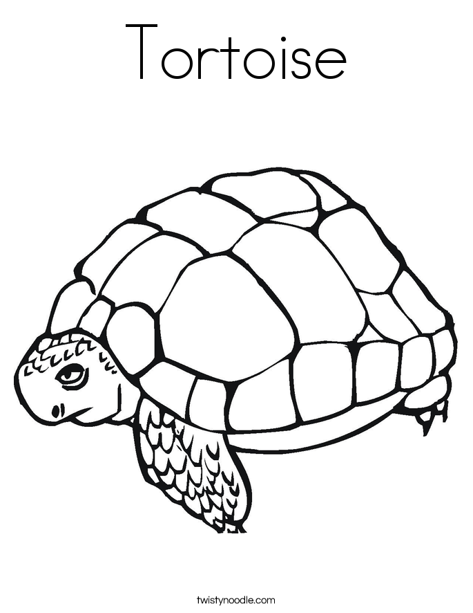 Tortoise coloring #1, Download drawings