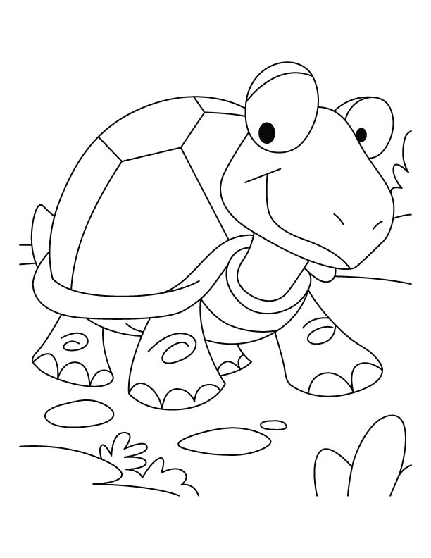 Tortoise coloring #16, Download drawings