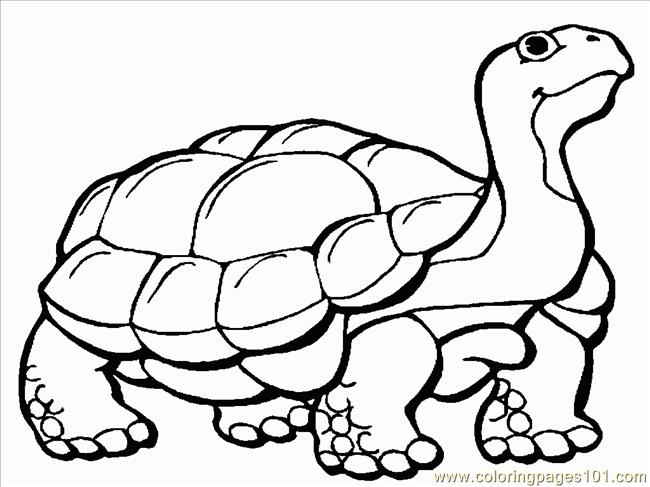 Tortoise coloring #6, Download drawings