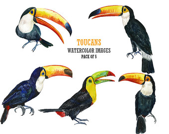 Toucanet clipart #15, Download drawings