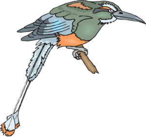 Toucanet clipart #4, Download drawings