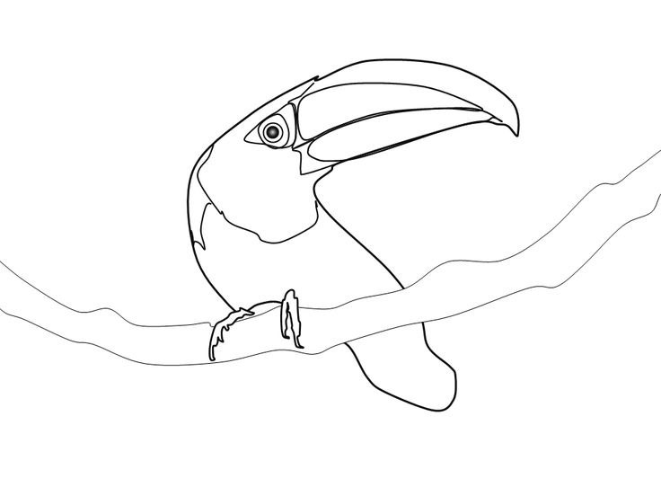 Toucanet coloring #10, Download drawings