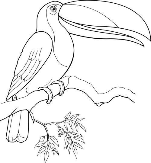 Toucanet coloring #9, Download drawings