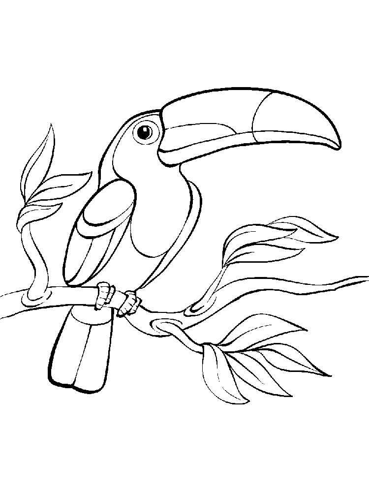 Toucanet coloring #6, Download drawings