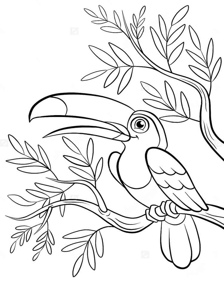 Toucanet coloring #7, Download drawings