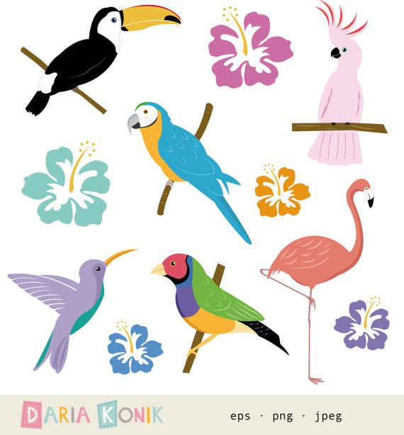 Toucanet svg #16, Download drawings