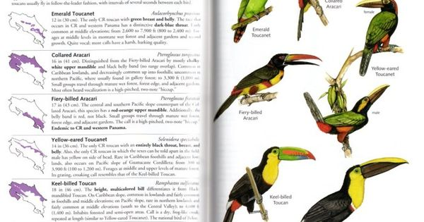 Toucanet svg #10, Download drawings