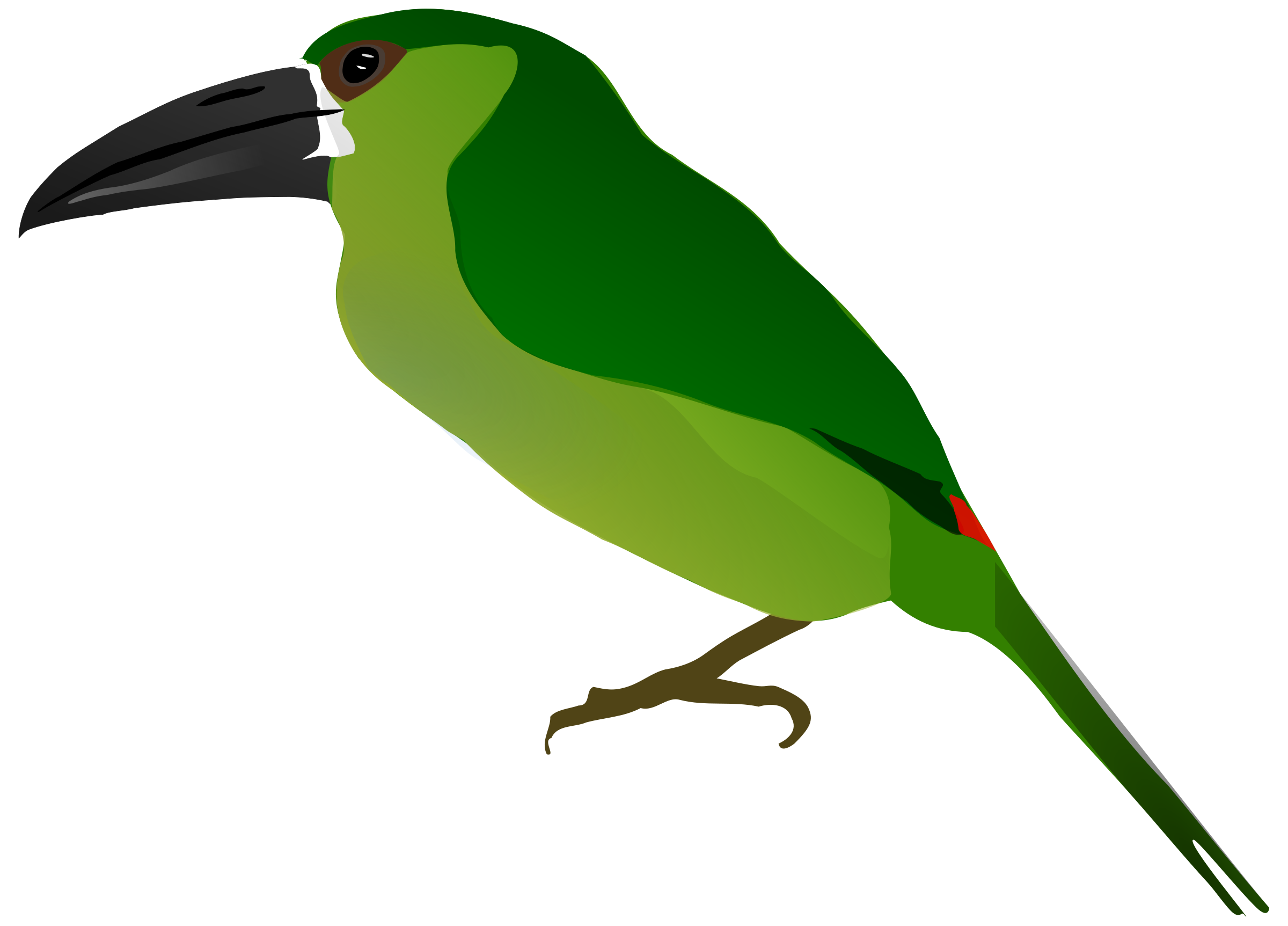 Toucanet svg #18, Download drawings
