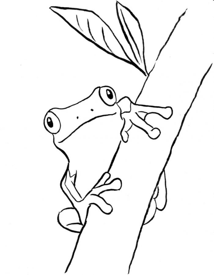 Tree Frog coloring #17, Download drawings