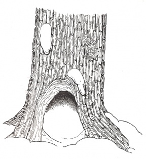 Tree Hollow coloring #16, Download drawings