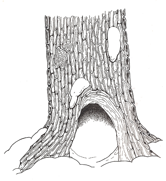 Tree Hollow coloring #20, Download drawings