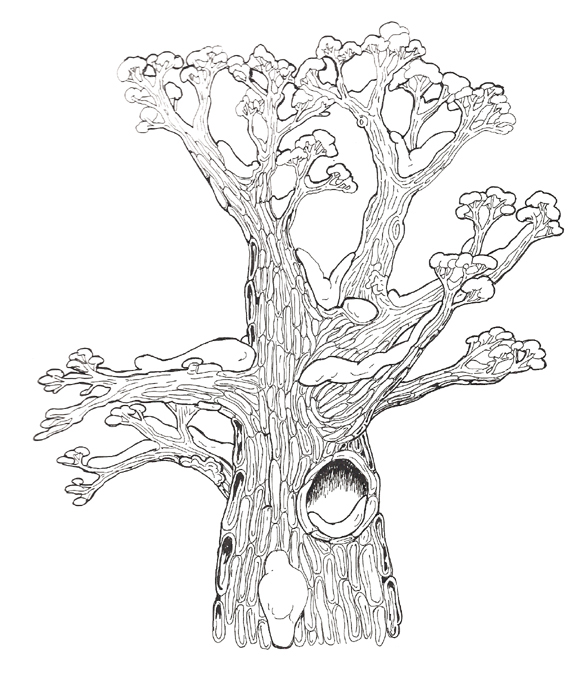 Tree Hollow coloring #14, Download drawings