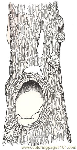 Tree Hollow coloring #17, Download drawings