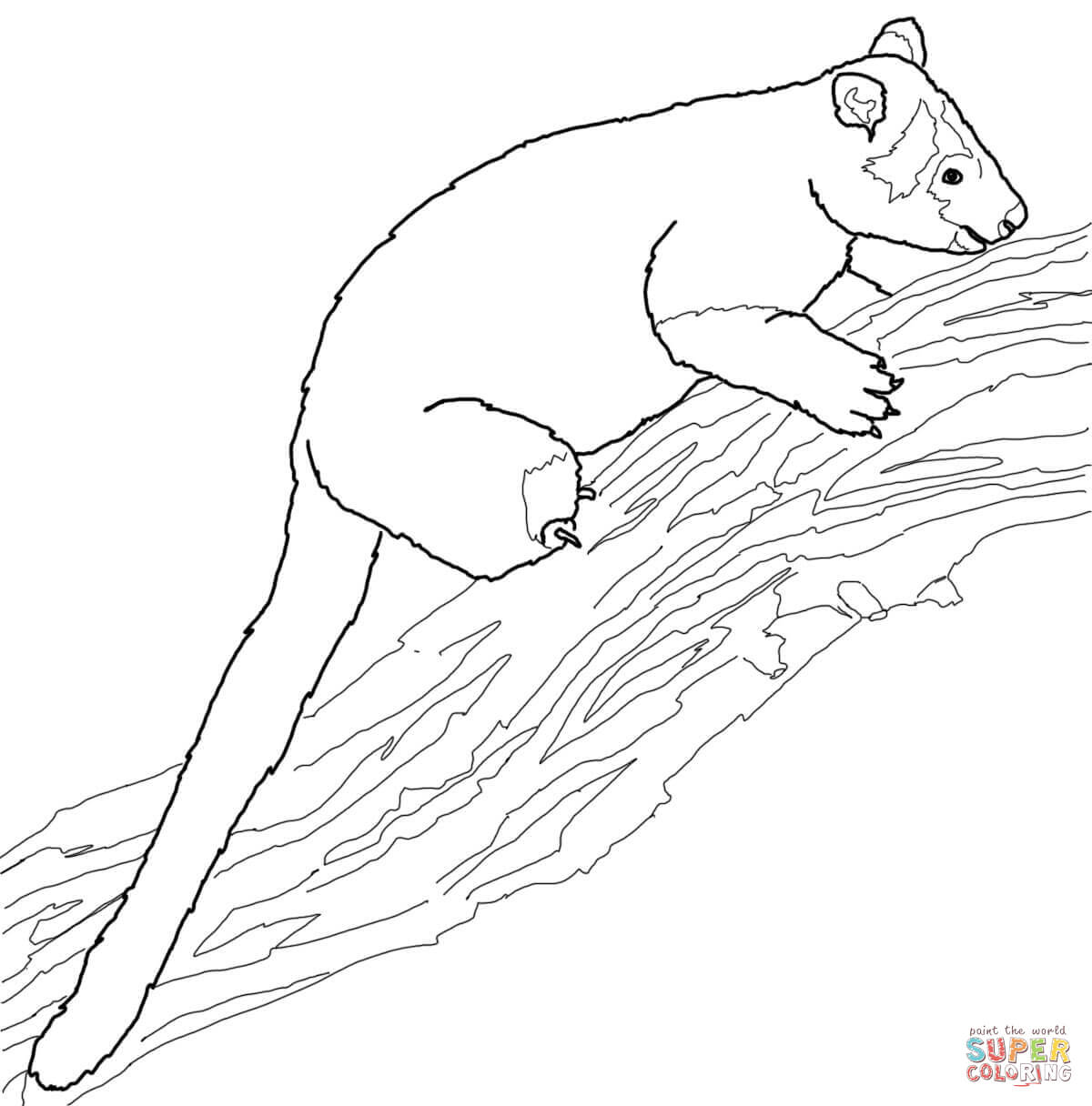 Tree Kangaroo clipart #10, Download drawings