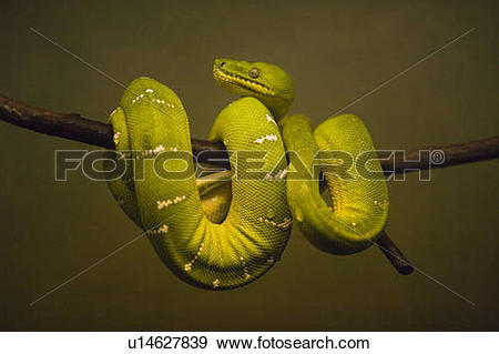 Tree Python clipart #6, Download drawings