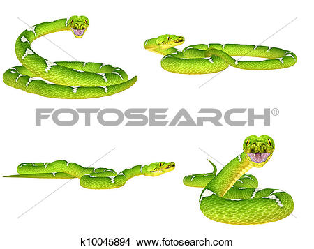 Tree Python clipart #14, Download drawings