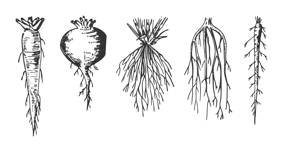 Tree Root svg #2, Download drawings