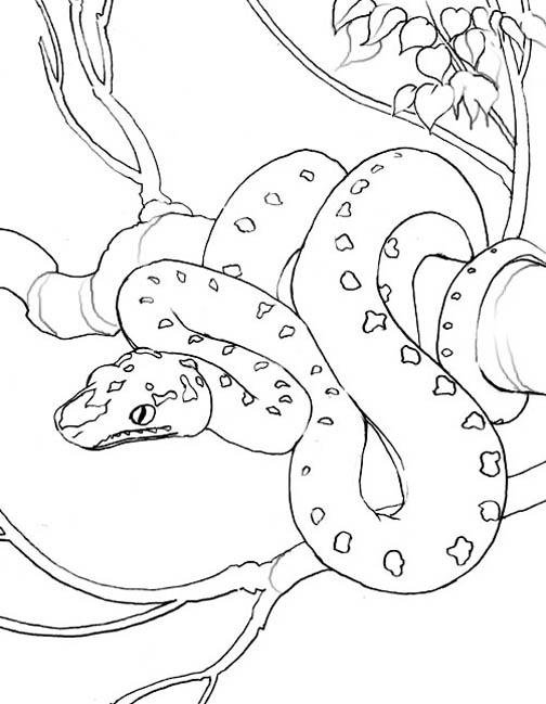 Tree Snake coloring #13, Download drawings