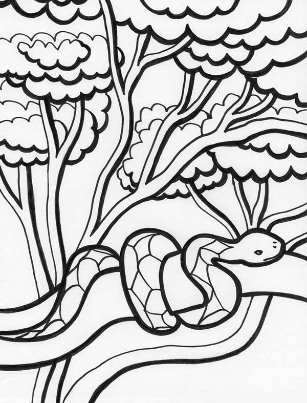 Tree Snake coloring #12, Download drawings