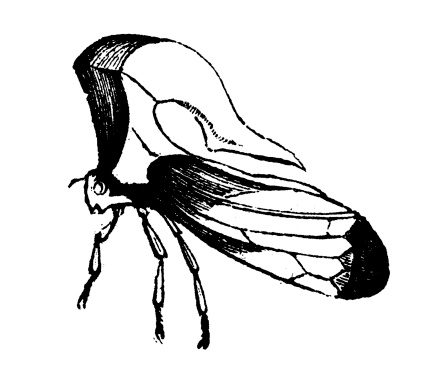 Treehopper clipart #11, Download drawings