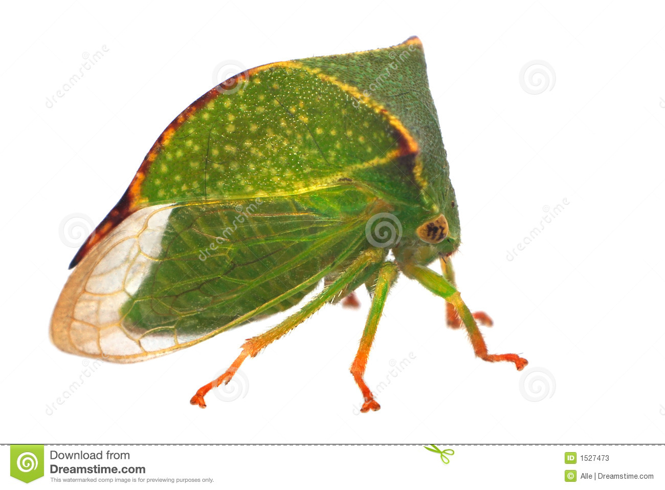 Treehopper clipart #18, Download drawings
