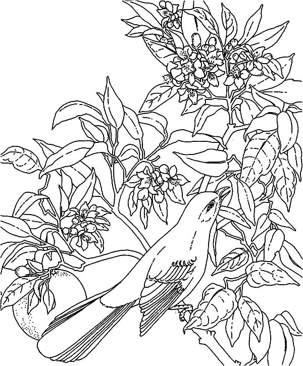 free coloring pages tropical birds - photo#34