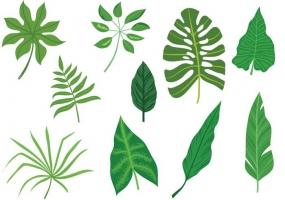 Tropics svg #12, Download drawings