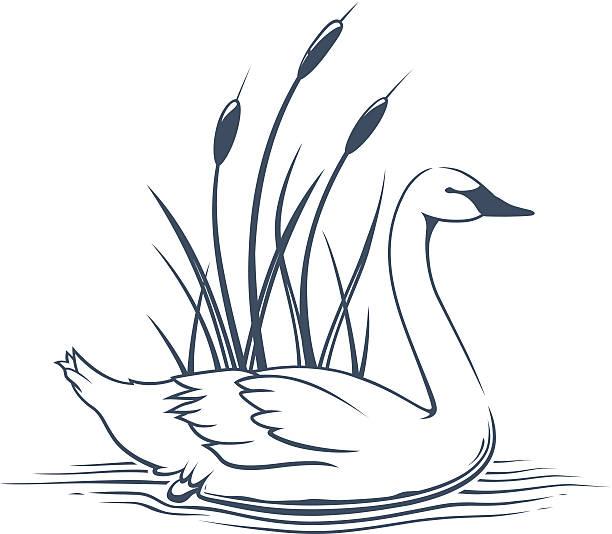 Trumpeter Swan clipart #16, Download drawings