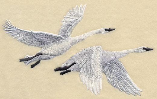 Trumpeter Swan clipart #12, Download drawings