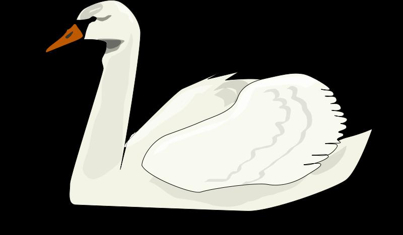Trumpeter Swan clipart #1, Download drawings