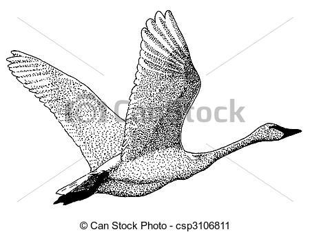 Trumpeter Swan clipart #15, Download drawings