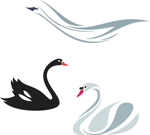 Trumpeter Swan clipart #18, Download drawings