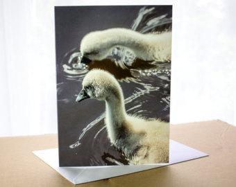 Trumpeter Swan svg #1, Download drawings