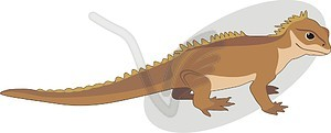 Tuatara clipart #4, Download drawings