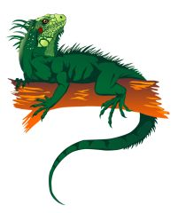 Tuatara clipart #8, Download drawings