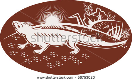 Tuatara clipart #3, Download drawings
