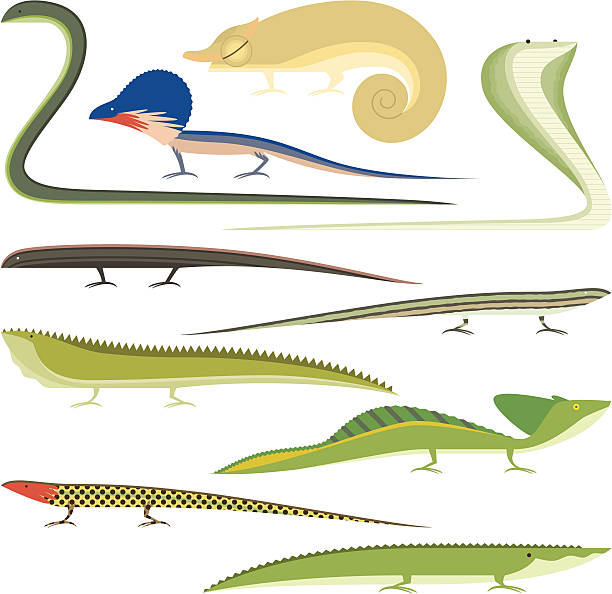 Tuatara clipart #12, Download drawings
