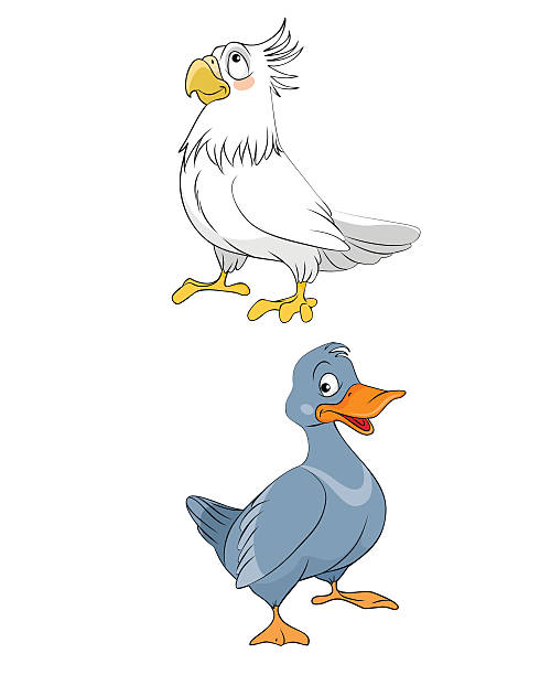 Tufted Duck clipart #6, Download drawings