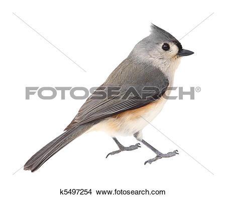 Tufted Titmouse clipart #9, Download drawings