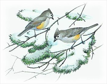 Tufted Titmouse clipart #2, Download drawings