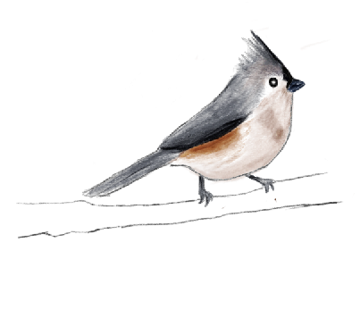 Tufted Titmouse clipart #19, Download drawings