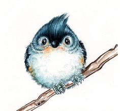 Tufted Titmouse clipart #17, Download drawings