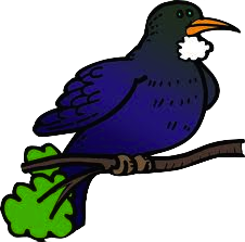 Tui clipart #1, Download drawings