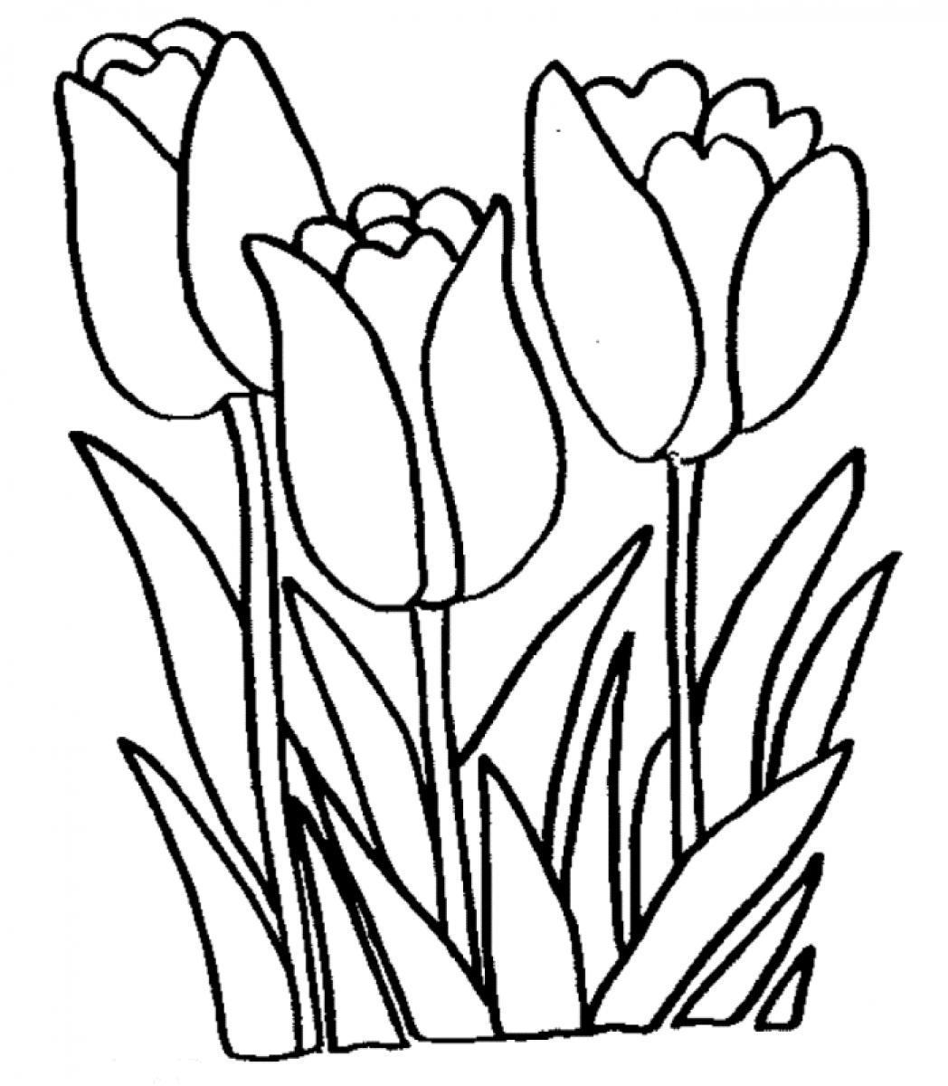 Tulip coloring #6, Download drawings