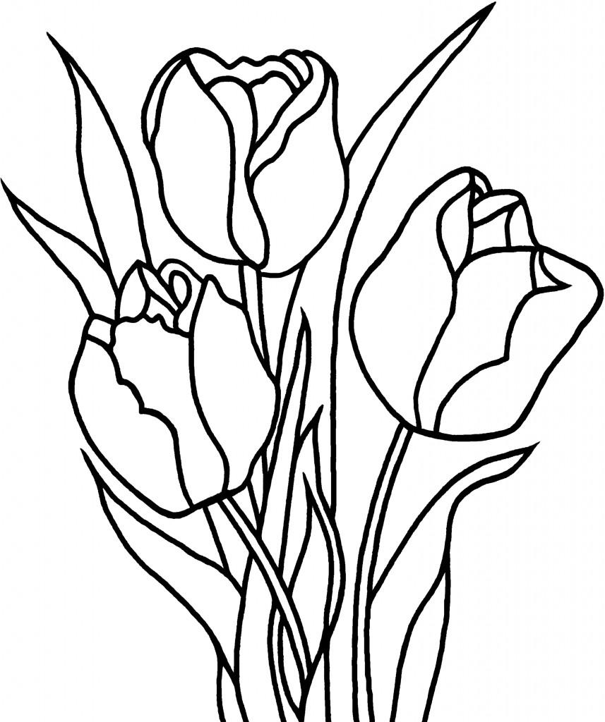 Tulip coloring #2, Download drawings